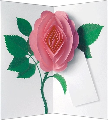 Pink rose (6 cards + envelopes + tag)