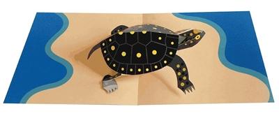 Turtle (6 cards + envelopes)