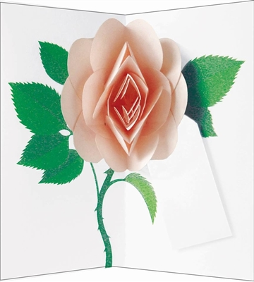 Salmon pink rose: pop-up with gift tag (6 ex - 4,25 per stuk)