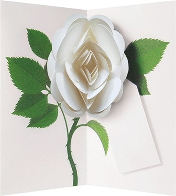 White rose: pop-up with gift tag (6 ex - 4,25 per stuk)