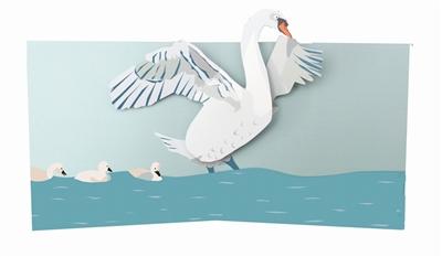 Swan (6 ex - 4,25 per stuk)