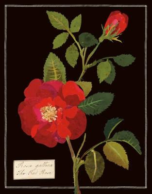 Mary delany florals keepsake box