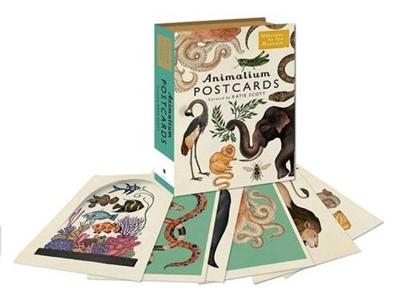 Animalium 50 postcards